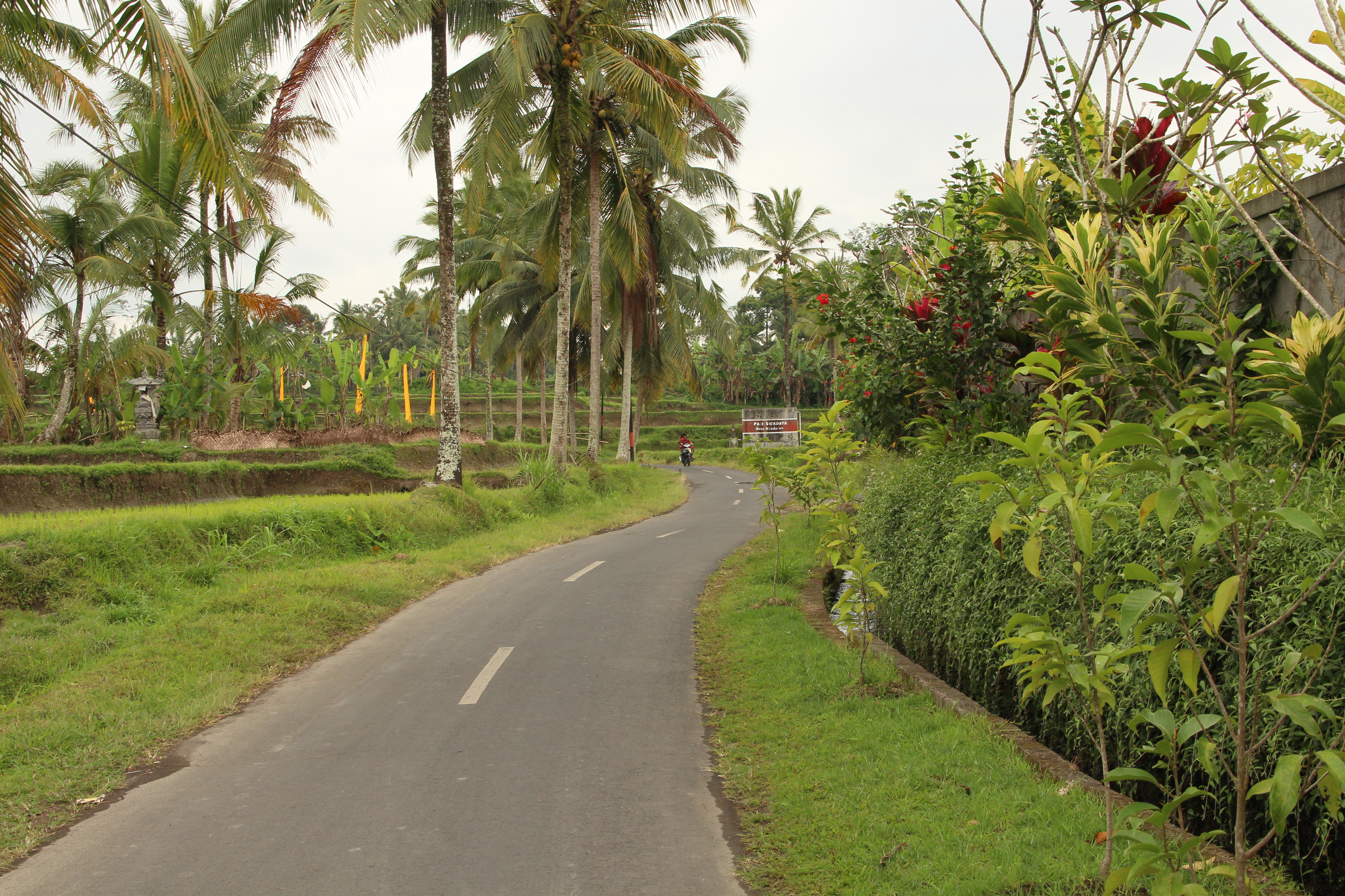 Mooie wegen op Bali langs palmbomen en sawa´s