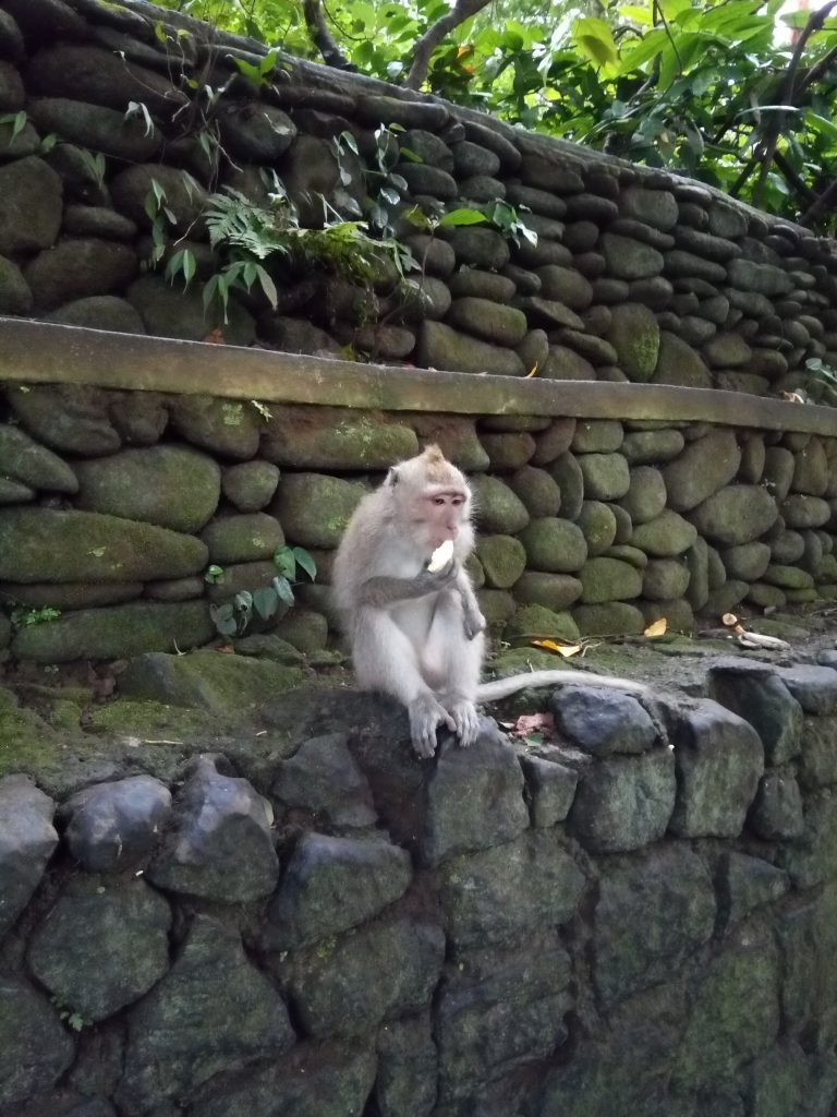Monkey Forest in Ubud op Bali