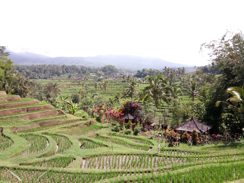 De Jatiluwih rijstvelden op Bali